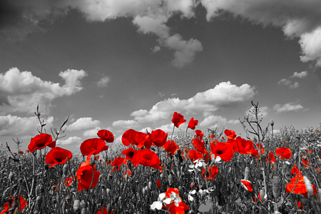 remembrance-day-poppy-facebook-4