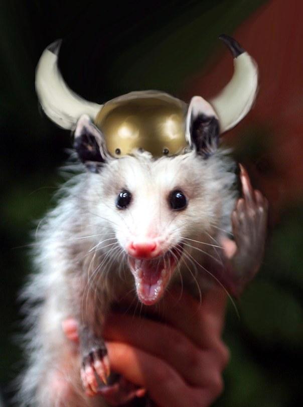 Viking_opossum