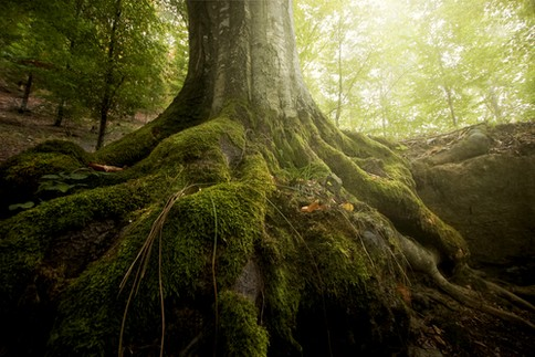 shutterstock_102692882_roots_tree_news_featured