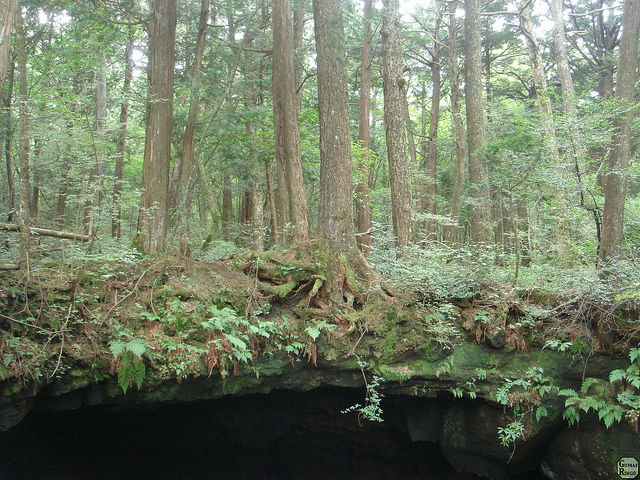 under-the-sea-of-the-trees