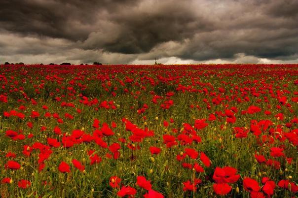 poppy-wars-remembrance-history-839-body-image-1447181947