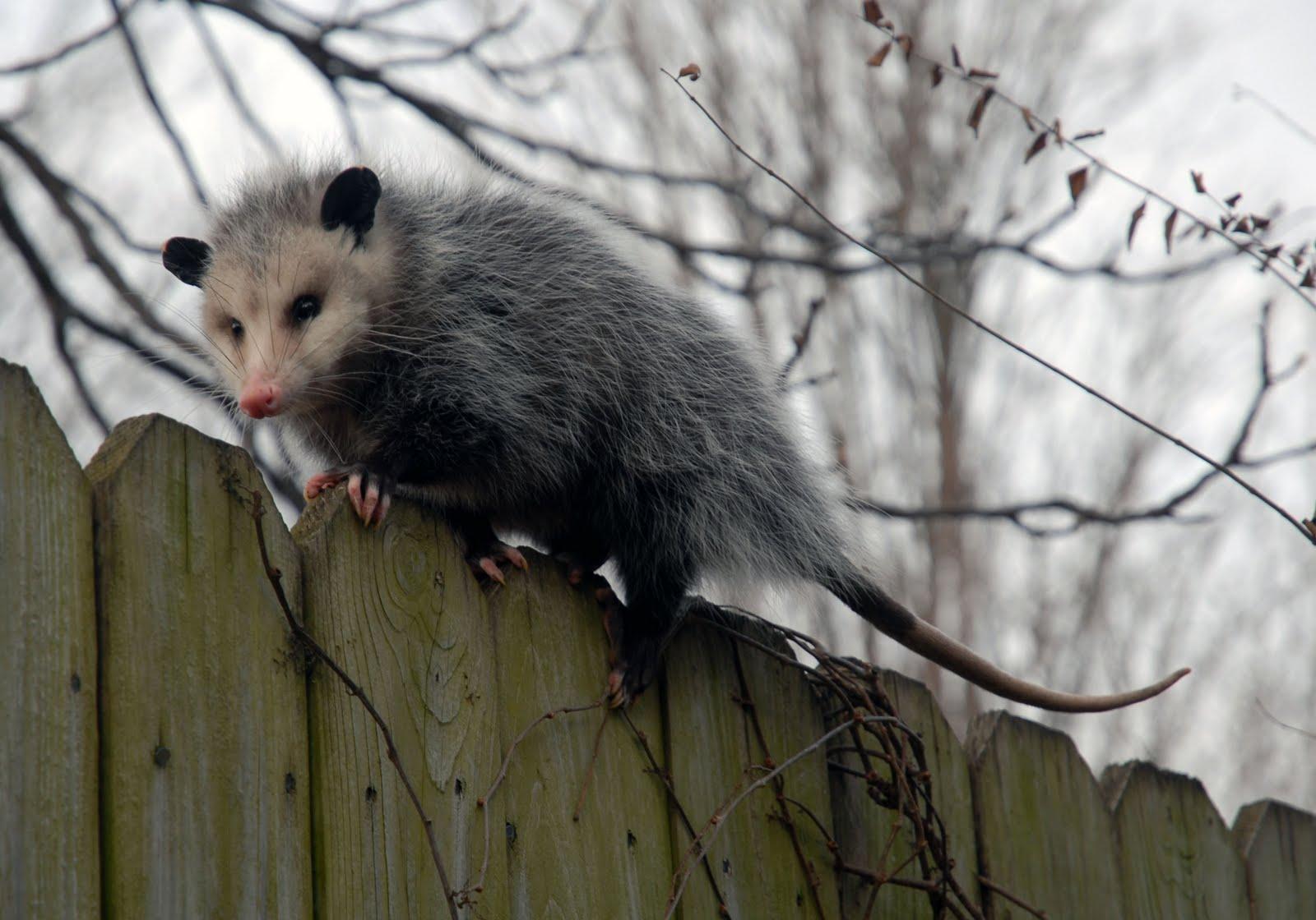 piety-possum-is-walking-away-from-all-your-bullshit