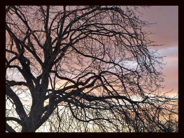 Krasskova World Tree copy.jpg