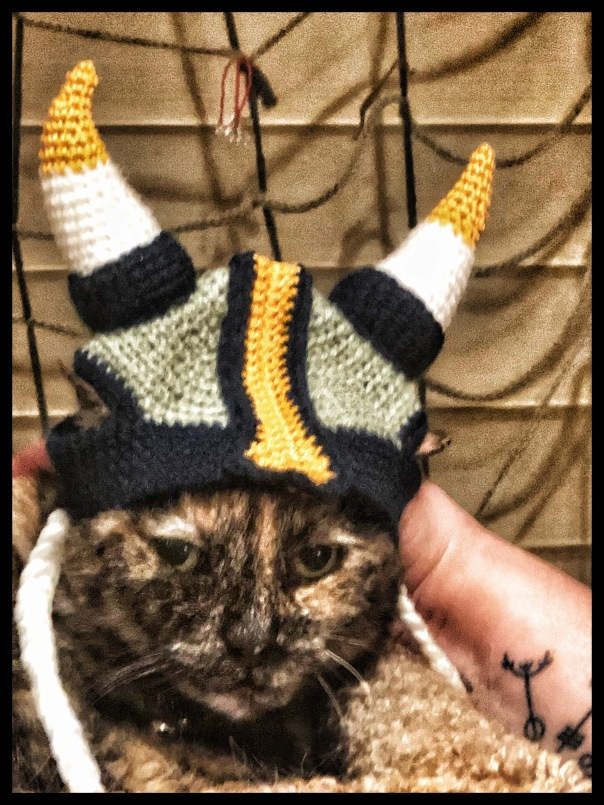 jan 2020 viking cat lol