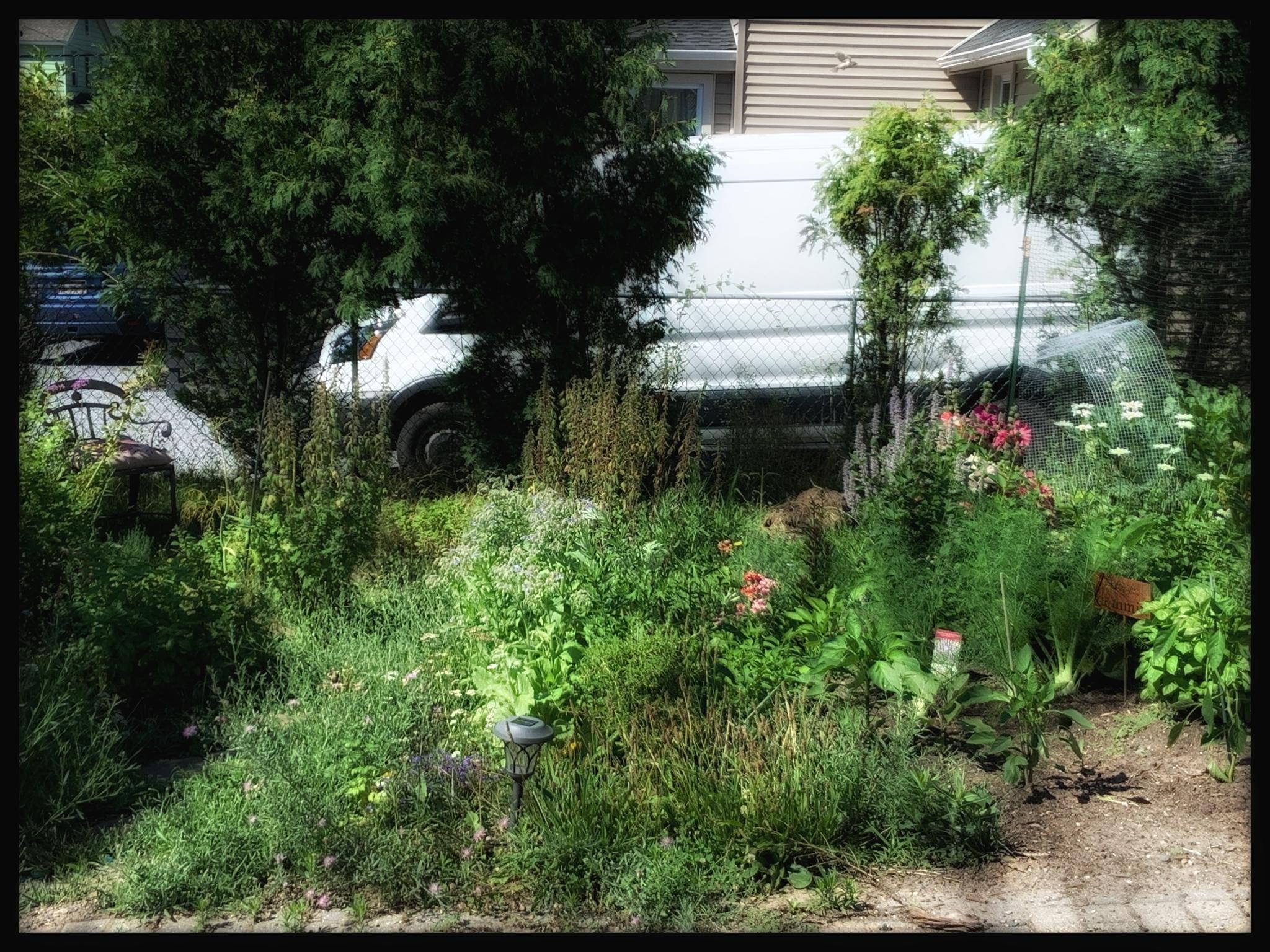 july 2020 herb garden