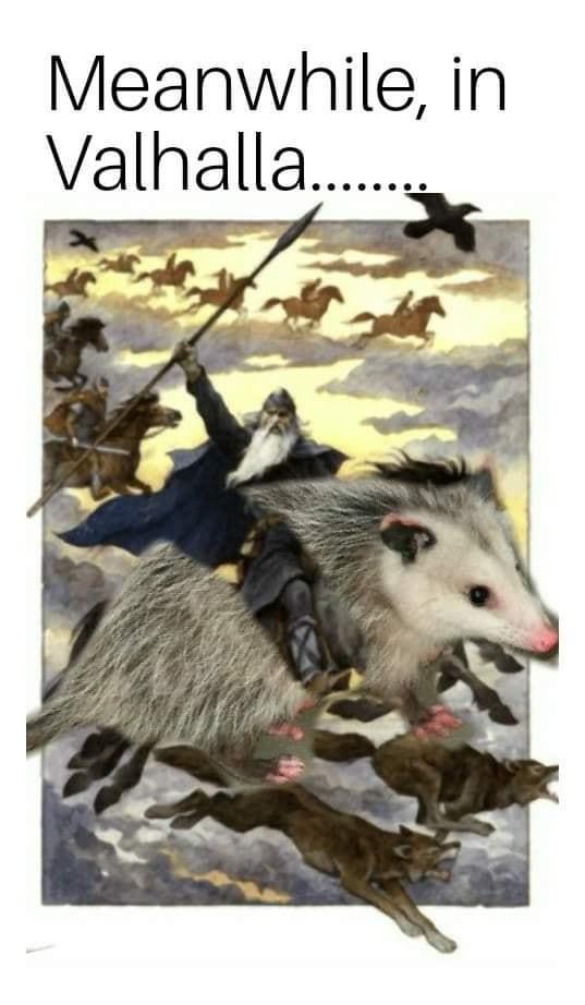 Piety possum rides again